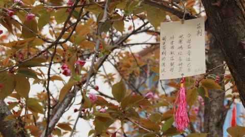 """花朝节——""""百花生日是良辰,未到花朝一半春"""""""